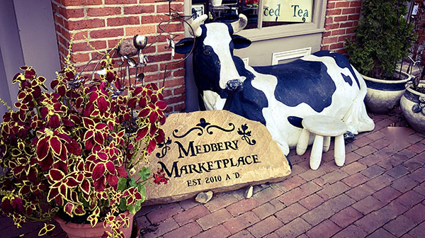 Medbery_Marketplace_Cow